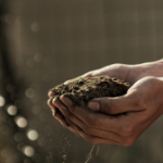 Soil in hands